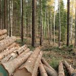 How Things Work: Choosing Wood
