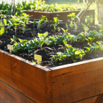 Wood Working Project: Raised Bed Garden